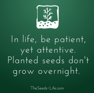 be patient seeds